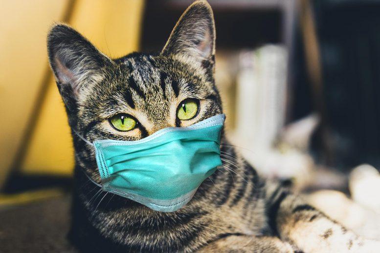 خبراء يتخوفون من طفرة جديدة لكوفيد تنقلها الحيوانات الأليفة
