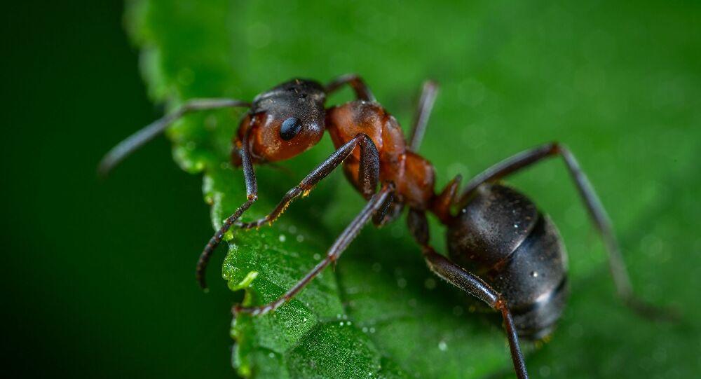 ما تفسير حلم النملة في المنام