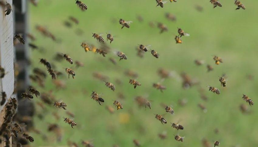 تفسير حلم هجوم الحشرات