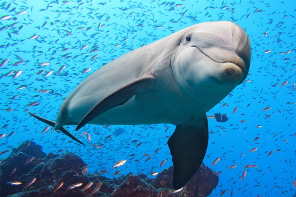 ما تفسير حلم الدلفين