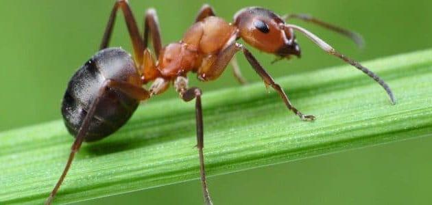 ما تفسير حلم النمل  في المنام