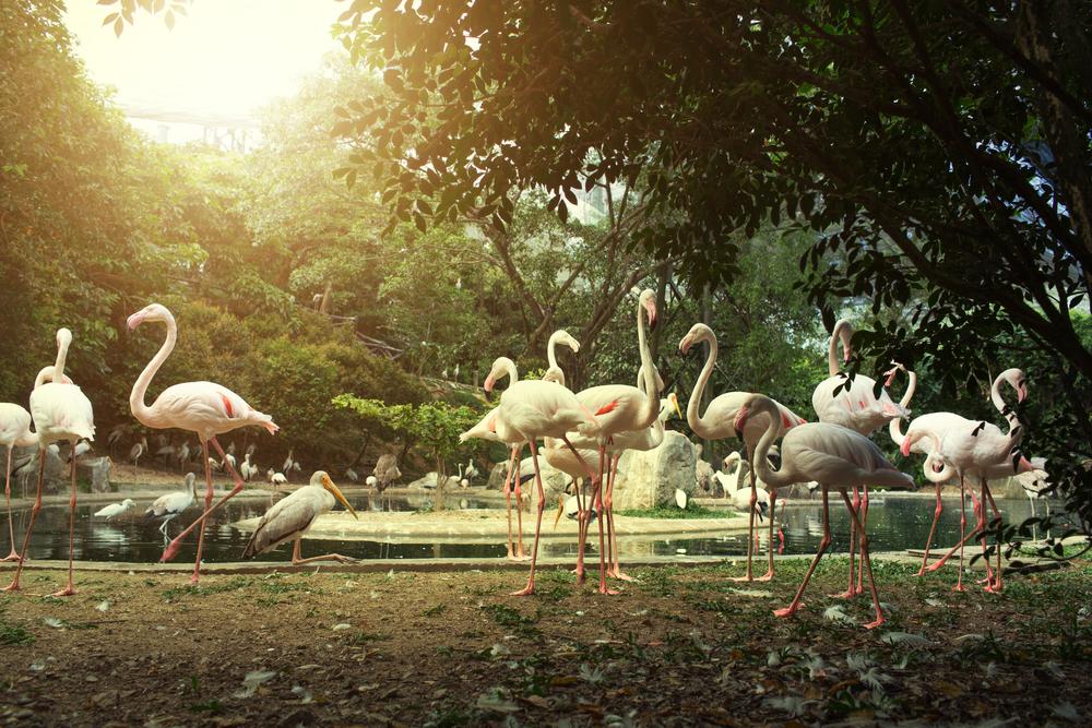 يومياتي-حديقة الطيور
